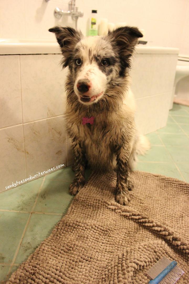 muddy-puppy